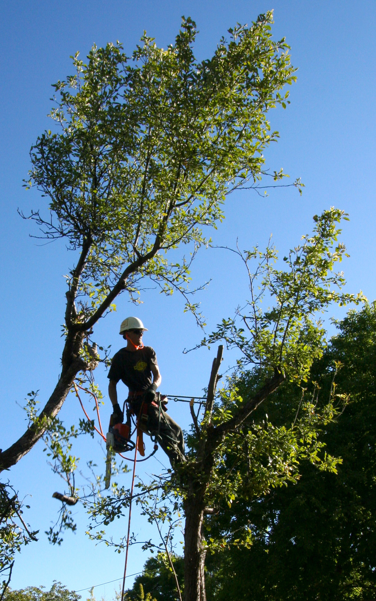 Tree Cutting is a dangerous profession