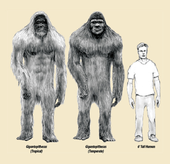 bigfoot compared to humans