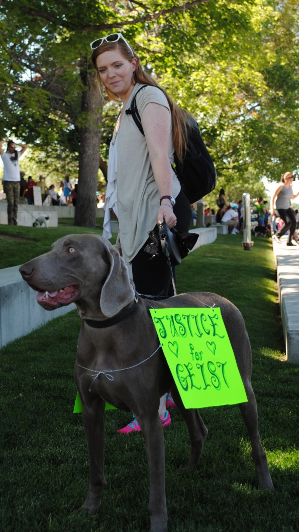 weimaraner at slc rally